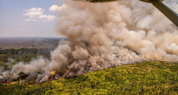 Greenpeace: ad agosto in Amazzonia 29 mila incendi