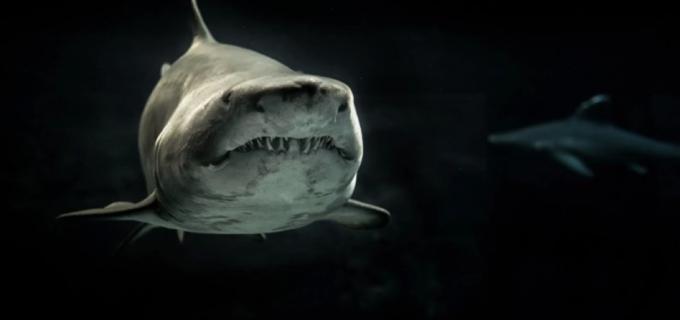 """Australia, uomo ucciso da uno squalo a Cable Beach: """"Stava nuotando nell'acqua bassa"""""""