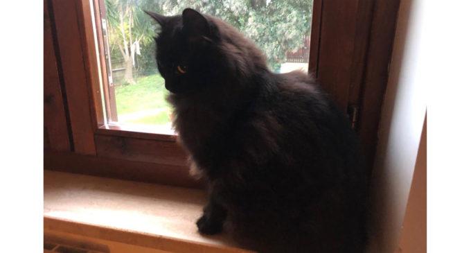 Il 17 novembre si celebra il Black Cat Day, la giornata del gatto nero